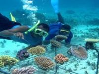Plongée sous-marine sur l'ilot de Mun